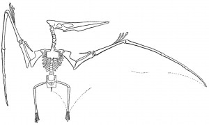 williston_pteranodon